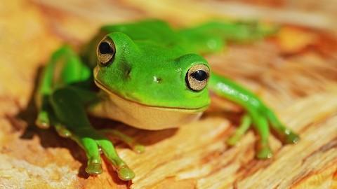 Netcurso-curso-de-screaming-frog