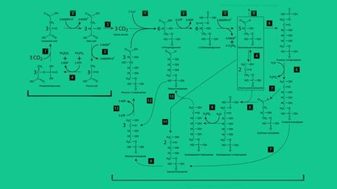 Mathematically Modeling Enzyme Kinetics