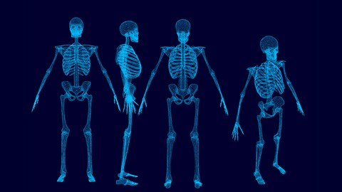 [Udemy Coupon] Human Musculo-Skeletal System- Part 2- lower limb