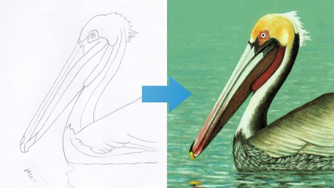 [Udemy Coupon] How To Draw a Pelican Step by Step with Pastel Pencils