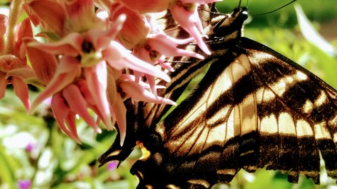 [Udemy Coupon] Create A Butterfly Garden