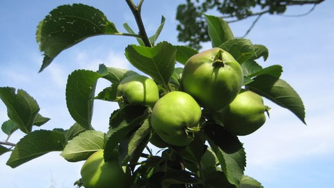 [Udemy Coupon] Growing Fruit Trees with Ease