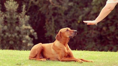 Sale : Udemy: Treatment & Prevention of Dog Aggression: Biting & Fighting