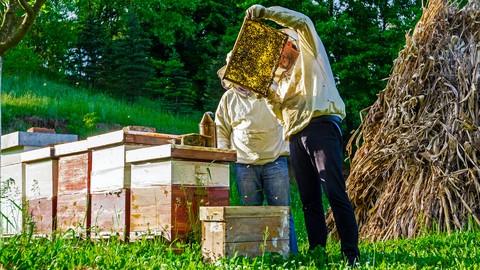 Beekeeping 101: Organic, Natural, Traditional