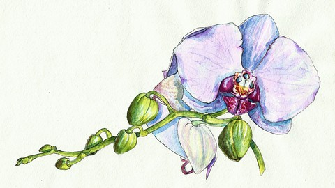 [100% Off Udemy Coupon] Watercolor realistic orchid painting: step by step workshop