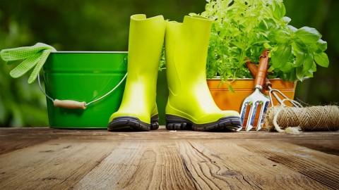 Organic Soil Building for the Backyard Organic Gardener