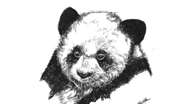 Drawing Animals using Pen, Inks and Watercolors | Udemy