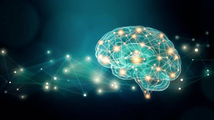 Neuroplasticity Begin To Change Life >> Neuroplasticity The Ultimate Brain Rewiring Formula 3 0 Udemy