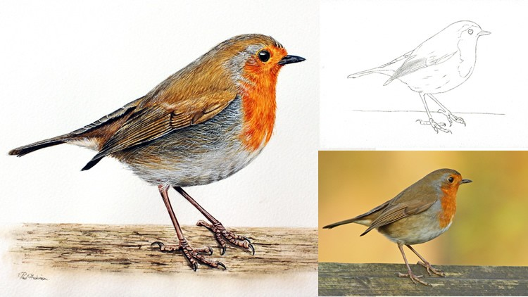 How to Paint a Realistic Robin Bird in Watercolour