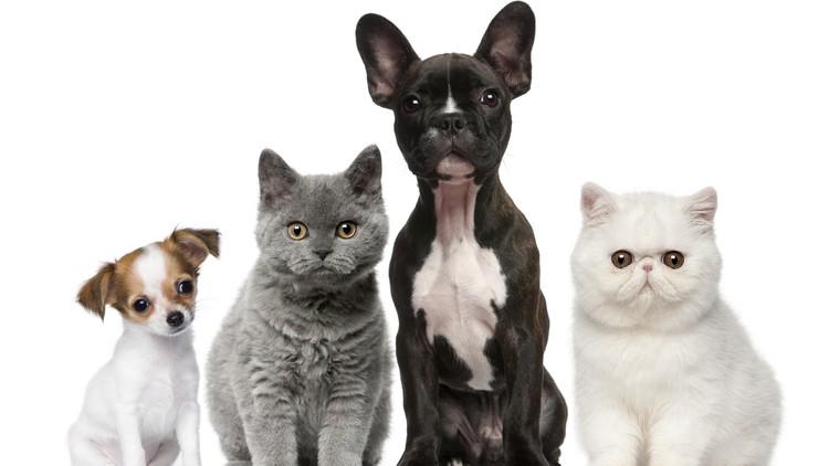 Animal Reiki Practitioner Certification